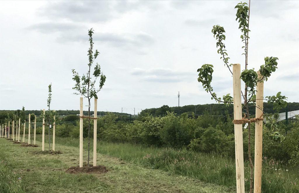 Die Bepflanzungsaktion am Solarkraftwerk Schweinfurt sorgt für mehr Biodiversität