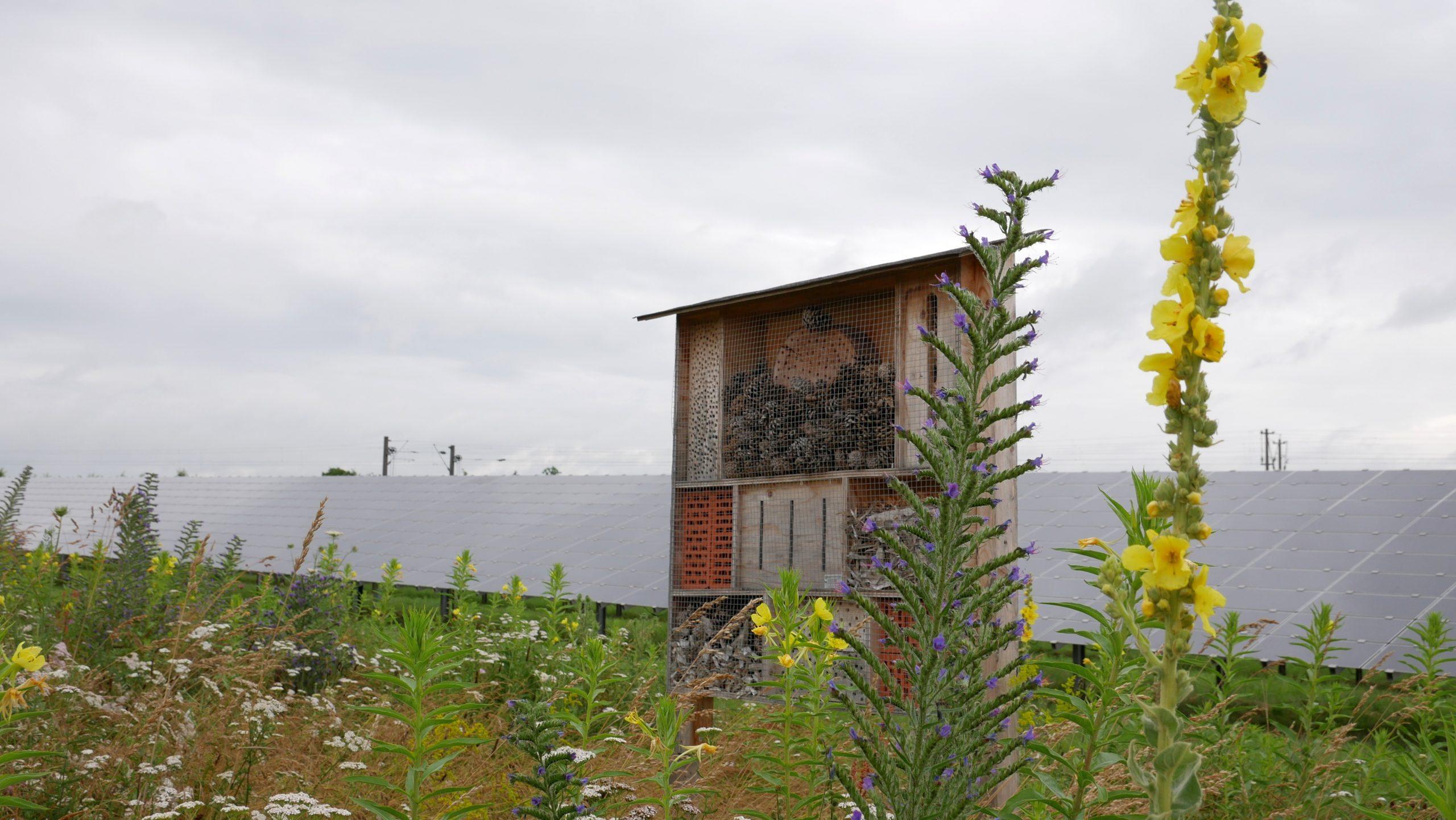 Solarkraftwerk in Schweinfurt-Oberndorf: Die Flächen kommen auch Insekten zugute. (Foto: Michael Enderlein)
